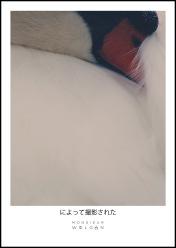 sleeping cygne